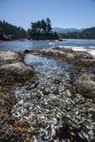 Бассейн прилива на олимпийском полуострове 1 Стоковые Изображения