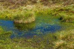 Бассейн трясины Стоковое Фото