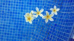 Бассейн цветков Стоковые Фотографии RF