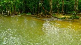 Бассейн яркого colorfull естественный в ландшафте джунглей экзотического тропического леса тропическом видеоматериал