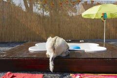 Бассейн Dog�s Стоковые Изображения RF