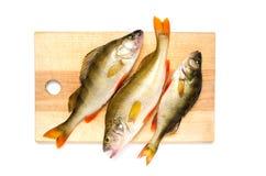 Бас реки на разделочной доске Захватнические рыбы на белой предпосылке Стоковые Изображения
