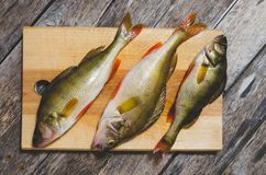 Бас реки на разделочной доске Захватнические рыбы на деревянной предпосылке Стоковая Фотография