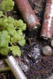 Батареи корозии различных форм и размеров Они лежат на том основании рядом с растущим зеленым растением над предохранения от силы Стоковые Изображения RF