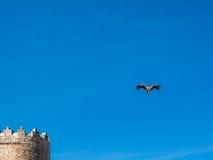 Башенка стены городка и аиста летания на голубом небе Стоковое Фото
