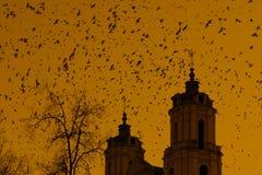 Башни церков и много птиц Стоковая Фотография