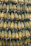 Башня ананаса Стоковое Изображение