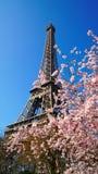башня времени весны eiffel Франции paris Стоковое фото RF