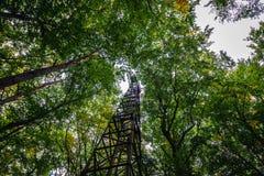 Башня в лесе Стоковое Изображение RF