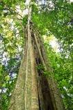 Башня дерева Стоковые Фото