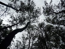 Башня деревьев Стоковая Фотография