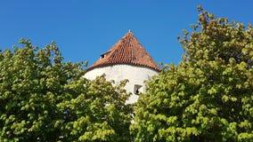 Башня за деревьями стоковое изображение