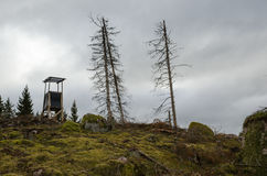Башня звероловства на холме леса Стоковые Изображения