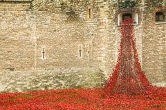 Башня дисплея WW1 мака Лондона Стоковые Фотографии RF