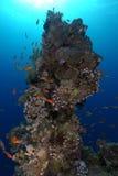 Башня коралла подводная стоковые фото