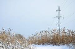 Башня линии электропередач расположена в болотистой области, покрытой с снегом Большое поле желтых bulrushes Стоковая Фотография