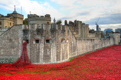Башня Лондона с морем красных маков для того чтобы вспомнить упаденных солдат WWI - 30-ое августа 2014 - Лондона, Великобритании Стоковая Фотография