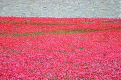 Башня Лондона с морем красных маков для того чтобы вспомнить упаденных солдат WWI - 30-ое августа 2014 - Лондона, Великобритании Стоковые Изображения RF