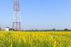 Башня радиосвязи в желтом цветке Стоковые Фото