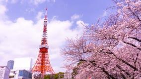 Башня токио с временем переднего плана Сакуры весной на токио Стоковая Фотография RF