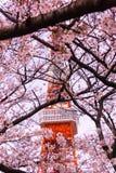 Башня токио с временем переднего плана Сакуры весной на токио Стоковые Фотографии RF