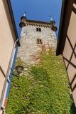 Башня церков с красочным плющом в Warendorf стоковые фото