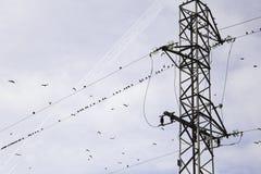 Башня энергии птиц Стоковая Фотография