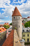 башня эстонии старая tallinn Стоковая Фотография