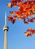 Башня CN и красные кленовые листы Стоковые Изображения