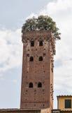 Башня Guinigi в Лукке, Италии, с деревьями на верхней части Стоковые Изображения