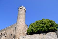 Башня Toompea Стоковые Изображения