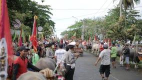 Бали, Индонезия - сентябрь 2016: Гонки буйвола †Makepung «в Бали сток-видео