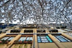 Балконы в Бильбао Стоковая Фотография RF