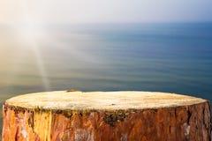 Балтийское море предпосылки пня сосны Стоковые Фото