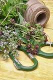 Бальзам лимона трав TFresh, тимиан, мята на деревянной доске и аксессуары Стоковые Изображения