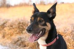 Бдительная собака Стоковая Фотография