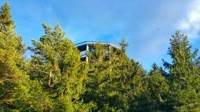 Бдительность Lipno деревьев следа Стоковые Фотографии RF