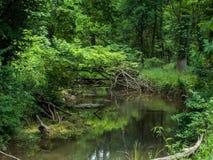 Бега спокойного потока через зеленый лес весеннего времени стоковые фотографии rf