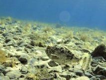 беглец рыб стоковые изображения rf