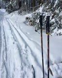 беговые лыжи в красивом национальном парке Harz в Германии, стоковое фото rf