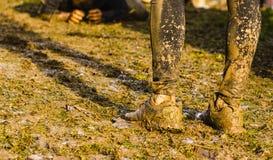 Бегуны гонки грязи проходя под препоны колючей проволоки во время весьма гонки препоны, детали ног стоковые фотографии rf