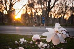 Бегуны наслаждаясь весной в Central Park Стоковые Изображения