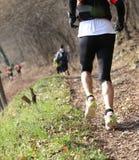 бегун во время гонки страны на следе в древесинах Стоковая Фотография