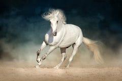 Бег белой лошади стоковые фото