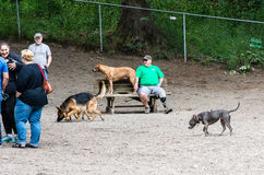 Бег собаки Стоковое фото RF
