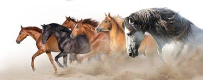 Бег табуна лошади на белизне стоковая фотография