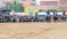 Бег фестиваля гонок буйвола участников Стоковое Изображение RF