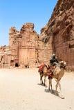Бедуины обеспечивают туристские езды верблюда в Petra Стоковое Фото