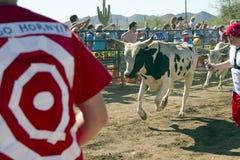 бежать быков америки Аризоны Стоковое Изображение