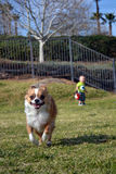 Бежать в парке Стоковое Изображение